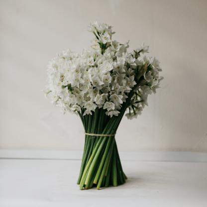 Spring Paperwhites