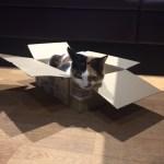 A cat at Lady Dinah's Cat Emporium