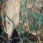 A bobcat at the Schonbrunn Zoo