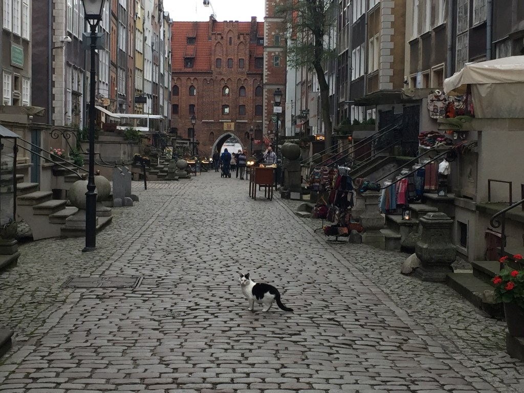 A Feral Cat in the Old Town of Gdansk, Poland
