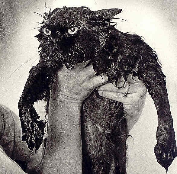 wet cat - this getting wet business really doesn't work for me