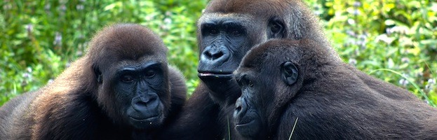 Gorillas in a meeting - who's in your corner?