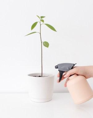 avocadoplant verzorgen, avocadoplant, rouwvliegjes, rouwvarenmug, rouwvliegjes bestrijden, thathomepage, interieurinspiratie