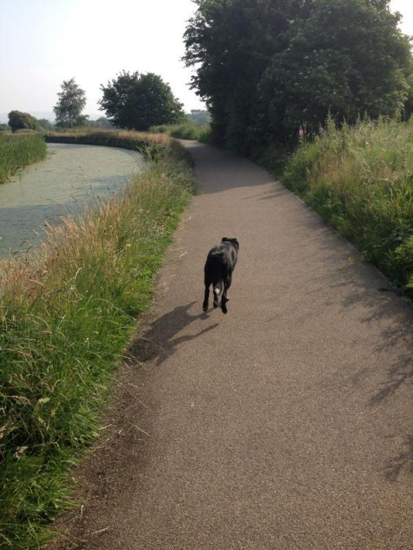 canal dog walk