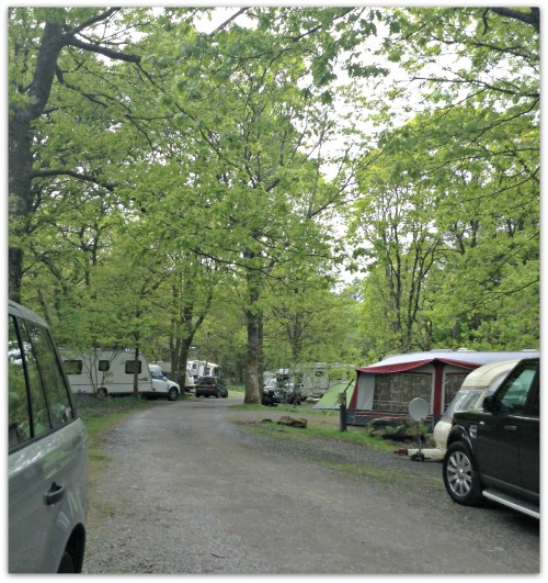 Visitors pitch up in between the trees
