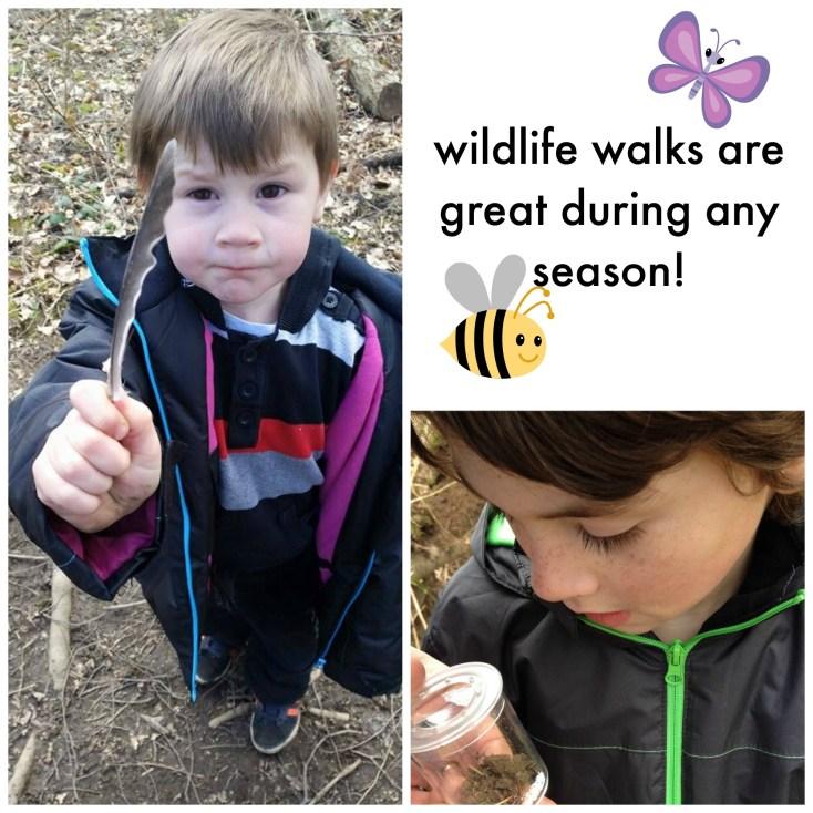 Wildlife walk collage