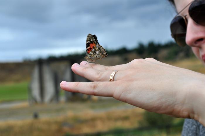 butterflies 5