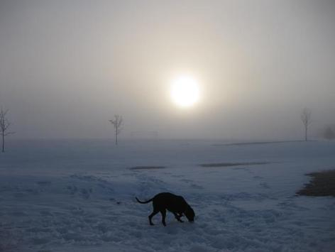 Black lab mix in the winter, fog, sunset
