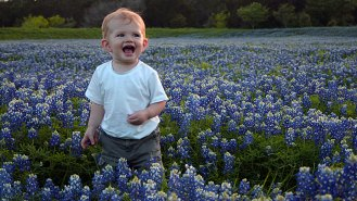 Scouting the field of Texas bluebonnets
