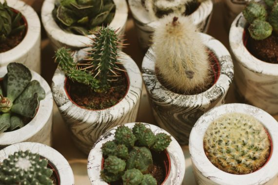 Succulents, hostess gifts