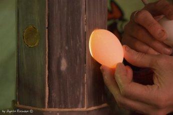 checking an egg