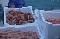 fished crabs