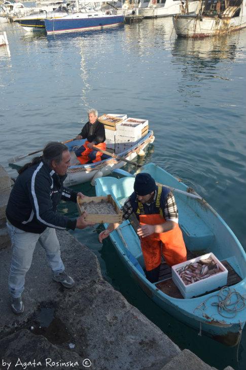 loading fish