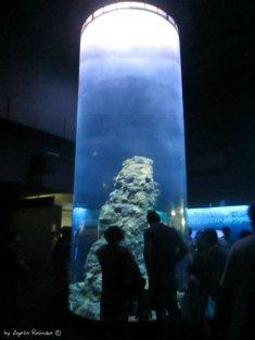 morays tank