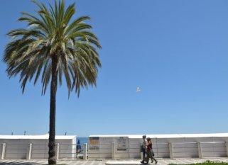 palma and seagull Albenga