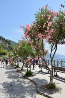 Monterosso promenade