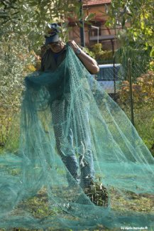 olives inside nets