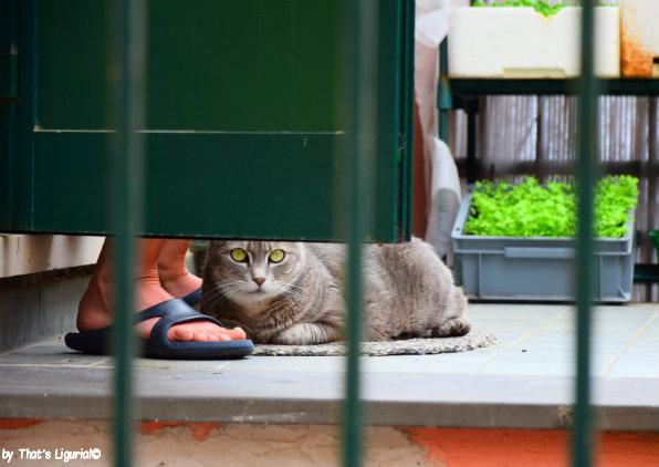a cat Boccadasse