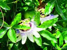 flowers Crosa