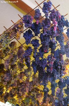 drayed grapes ready for preparing Sciacchetrà