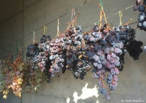 drying grapes for SciacchetràRiomaggiore