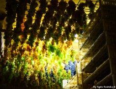 fresh grapes start draying for Sciacchetrà