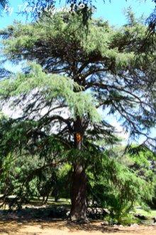 trees park Arenzano