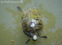 turtle Liguria