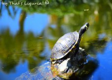 turtle of Arenzano