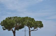 trees Parasio