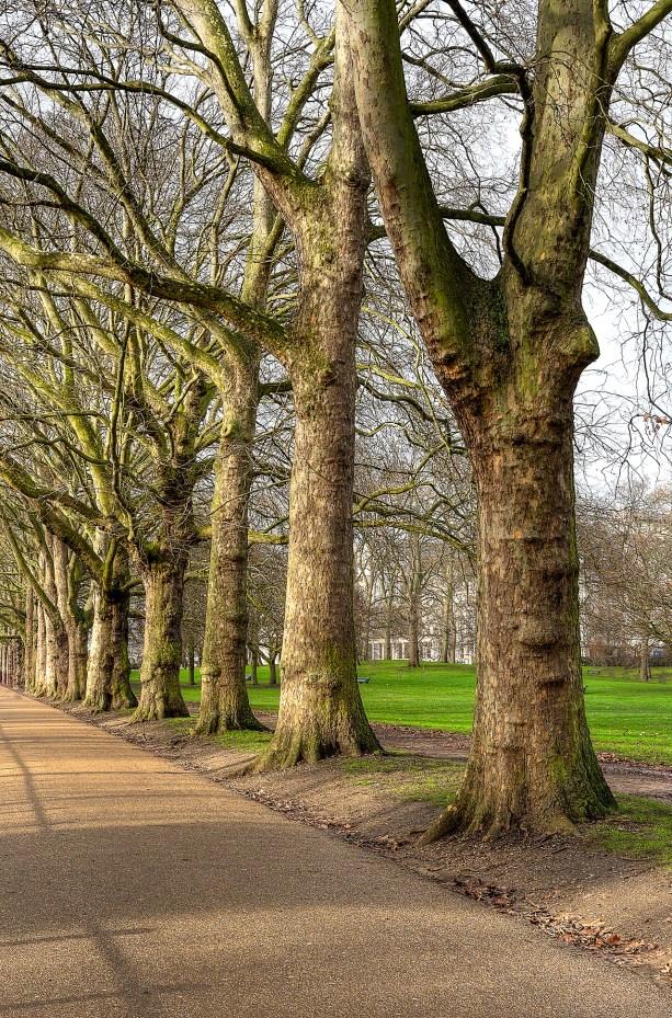 Trees beside Buckingham Palace