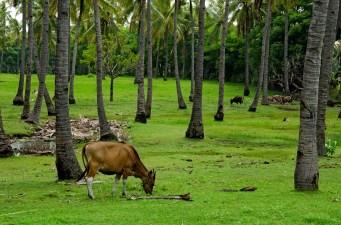 Pretty common sight around the island.