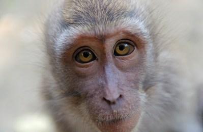 closeup of monkey's face