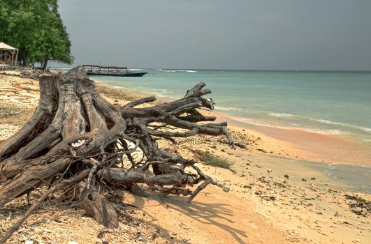 Driftwood on Sandy Indonesian Beach