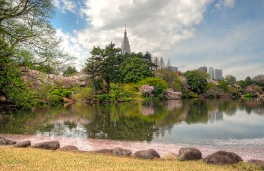 Blossoms in the water by the NTT building, Tokyo