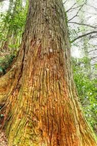 Cracked Tree Bark