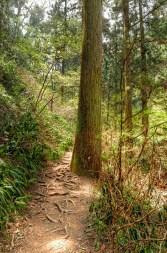 Beautiful Tree beside Hiking Trail