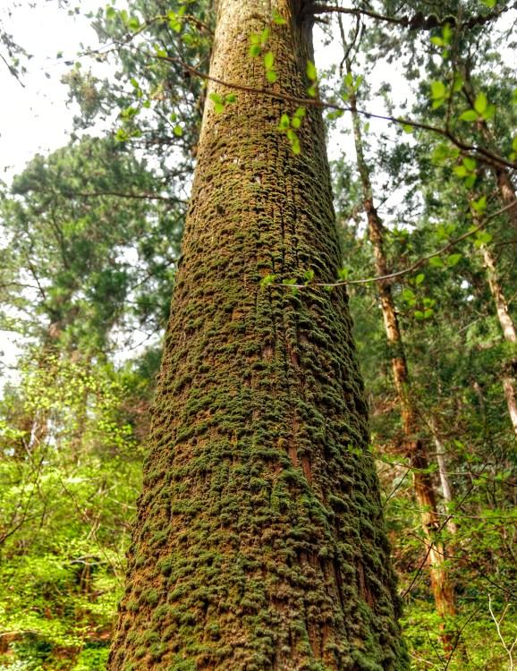 Thick Tree Moss