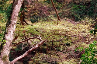 Flat Tree Branch