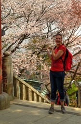 Cherry Blossoms on Mount Takao