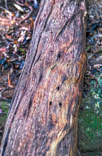 Yakushima Island, Japan. Photo of wooden log with twisted natural beauty
