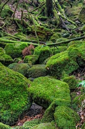 Photo of moss covered rocks on Yakushima island, Japan