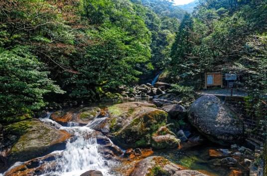 Photo of the start of a hiking trail on Yakushima island, Japan