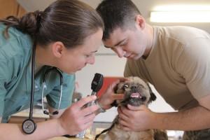 Top 10 Pet Care tips
