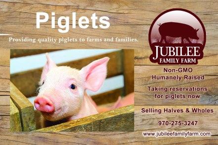 Jubilee Farm Postcard - Piglets, Front_Updated 10-14