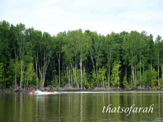 Matang Mangrove