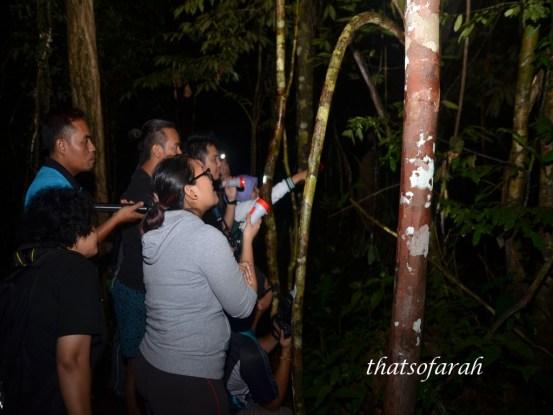 Night Jungle Walk at Mutiara Taman Negara