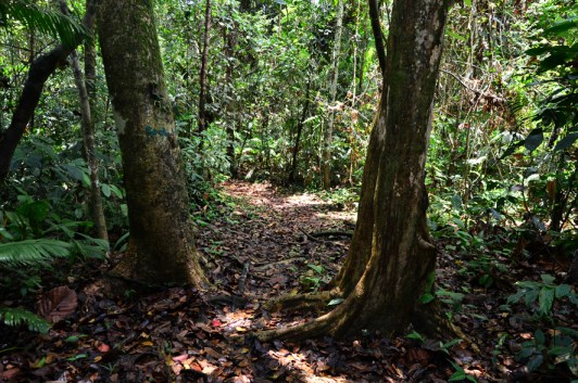Sarawak Rainforest