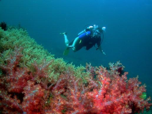 Anemone Garden, Miri Diving