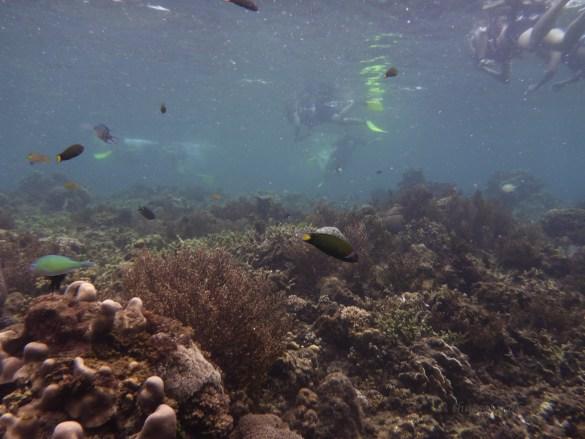 Mantanani Island Underwater